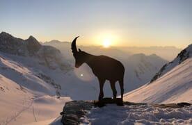NEU: Skitour Piz Medel