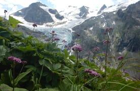 NEU: Gletschertrekking Trift- und Rhonegletscher